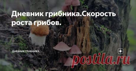 Дневник грибника.Скорость роста грибов. Видео ,как растет белый гриб.