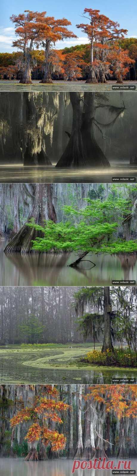 Болотные пейзажи (16 фото) | Релаксик