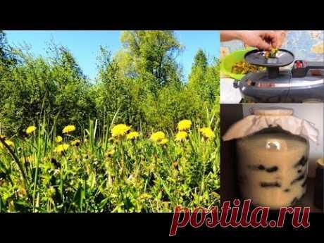 """ч. 1. Одуванчик - желтая  🌻 """"таблетка"""" для зрения. А его мукополисахарид - для здоровья печени."""