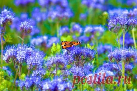 Весенний посев сидератов — какие травы выбрать для теплицы и огорода | Азбука огородника | Яндекс Дзен