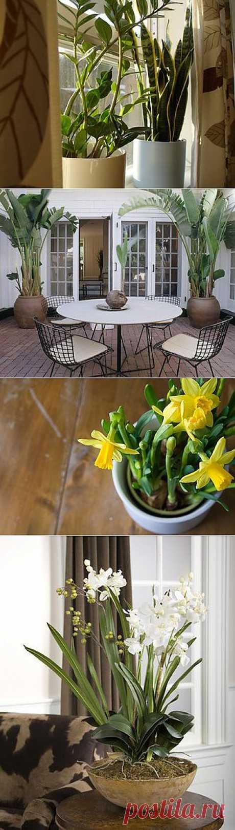 Какую температуру воздуха любят ваши комнатные растения? Признаки того, что им у вас слишком жерко или слишком холодно.