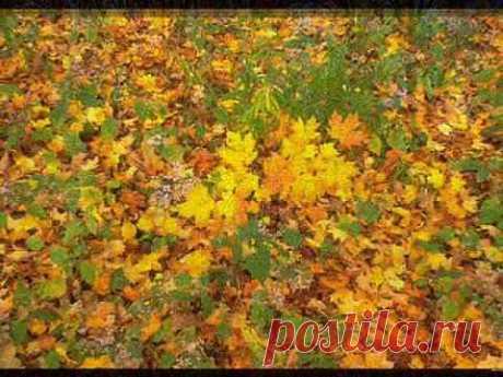 Осенний поцелуй - YouTube