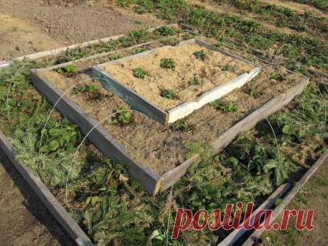 План работ в саду и огороде на июнь (23 пункта)   Дом+   Яндекс Дзен