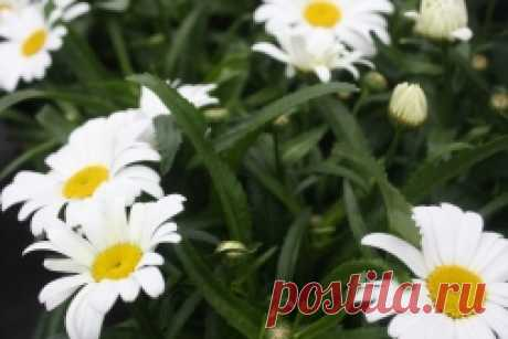 Herbs - treat and smell sweet - Sadovodka