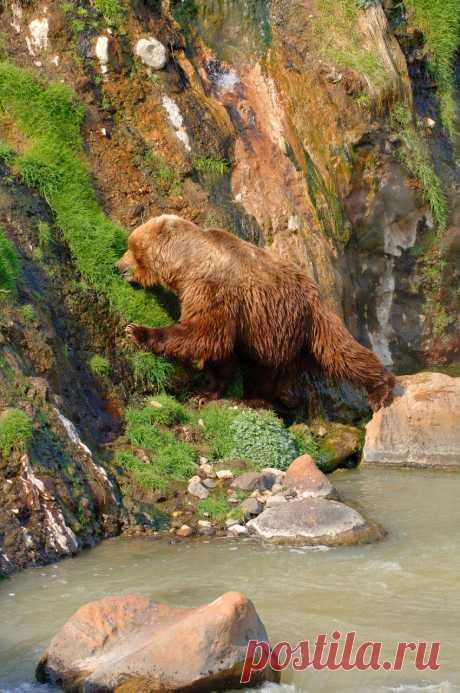 Медведи...
