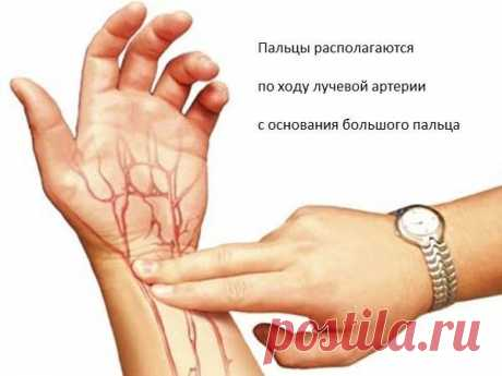 Почему пульс должен быть в норме и как его проверить? — Красота и здоровье