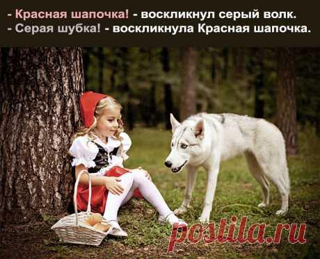 Приколы с животными: до слез смешные фото с анекдотами