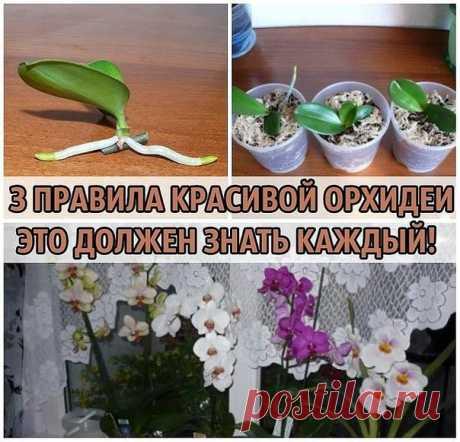 3 ПРАВИЛА КРАСИВОЙ ОРХИДЕИ. ЭТО ДОЛЖЕН ЗНАТЬ КАЖДЫЙ!   Сохраните, чтобы не потерять!  Не затягивайте с пересадкой  Пересаживают орхидеи один раз в два-три года, по окончании цветения или в конце периода покоя. Но часто это приходится делать сразу после покупки.  Дело в том, что перед продажей орхидеи пересаживают в более влагоемкий субстрат, чем им требуется.   Это позволяет растениям перенести транспортировку, но может вызвать загнивание корней. В этом случае с пересадкой...