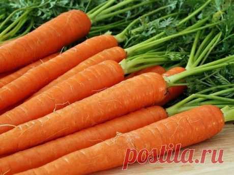 """5 ШАГОВ К ВЫСОКОМУ УРОЖАЮ МОРКОВИ   Журнал """"JK"""" Джей Кей Морковь на своих участках сажают все. Сладкие, оранжевые корнеплоды не только вкусны, но и полезны. В них много каротина, витаминов"""