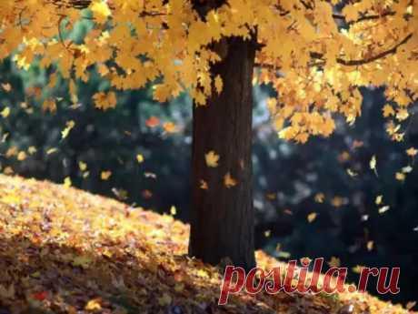 """(42) Шепотки на падающие листья: как привлечь удачу в золотую осень... - Познавательный сайт ,,1000 мелочей"""" - медиаплатформа МирТесен (22) Шепотки для защиты дома от злых людей - Познавательный... - медиаплатформа ЖизньИнтересная (112) Шёпот в день рождения: как открыть свой путь... - (1) Эзотерика. Магия. Мистика - эзотерический сайт МирТесен... (8) Эзотерический форум - Как привлечь деньги в жизнь (2) Эзотерический сайт Магия - онлайн сервис поиска..."""