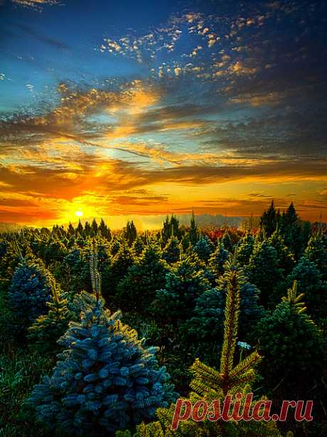 life by the drop — coiour-my-world: Not Forgotten by Phil~Koch on...