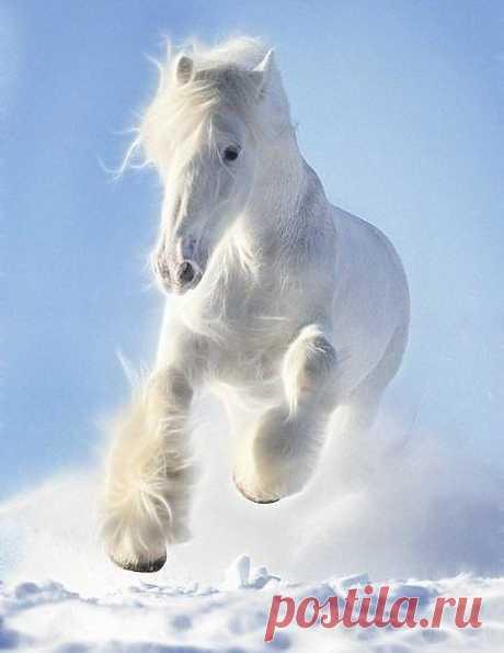 белый / Животные / Ее величество-Лошадь / Pinme.ru / Татьяна Садоведова