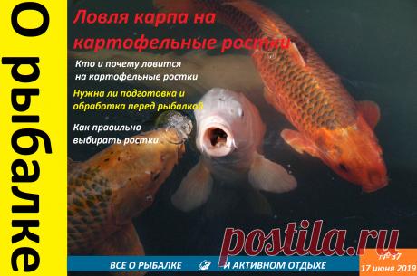 От рыбы нет отбоя:Ловля карповых на картофельные ростки