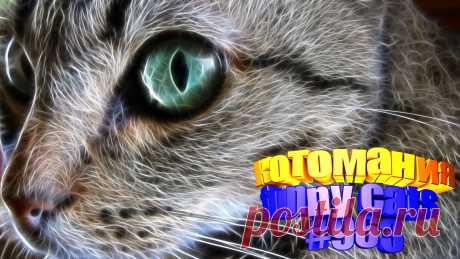 Любите смотреть видео про смешных котов? Тогда мы уверены, Вам понравится наше видео 😍. Также на котомании Вас ждут: видео кот,видео кота,видео коте,видео котов,видео кошек,видео кошка,видео кошки,видео о котах, видео прикол, видео с котиками, видео эти смешные кошки, коты, кошка, кошки, приколы про, про кошек, ролики про животных, самые смешные кошки, смешные видео про кошки, смешные котята