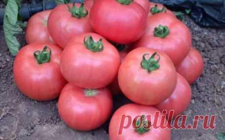 Мясистые сорта розовых томатов для раннего урожая | Твоя усадьба | Яндекс Дзен
