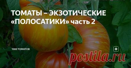 ТОМАТЫ – ЭКЗОТИЧЕСКИЕ «ПОЛОСАТИКИ» часть 2 Продолжаем знакомить любителей томатов с урожайными, экзотическими сортами: