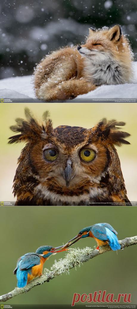 Финалисты конкурса фотографии дикой природы National Geographic Nature Photographer 2016 | MixStuff