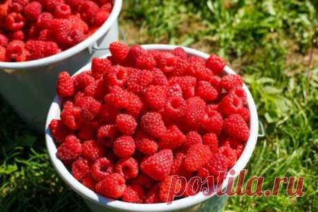 As it is possible to receive a big harvest of raspberry — 6 hundred parts