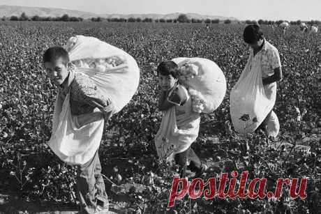 Как в СССР заставляли трудиться школьников Многие современные родители считают любой труд для своего ребенка эксплуатацией. Они сразу начинают ругаться, что их дети не обязаны что-то делать в школе помимо учебы. Они же платят за уборку. Так зачем тогда нужна техничка?