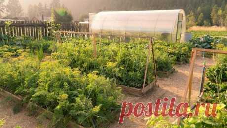 Советы для высаживания первой грядки | Сад и Огород | Яндекс Дзен