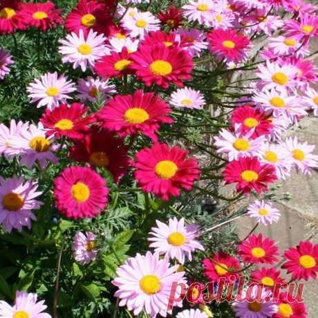 Photo by Сад и огород on May 15, 2020. На изображении может находиться: цветок, растение, природа и на улице