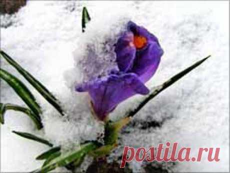 Весенний ветер за дверьми... в кого б влюбиться, чёрт возьми!   Блог Ирины Зайцевой