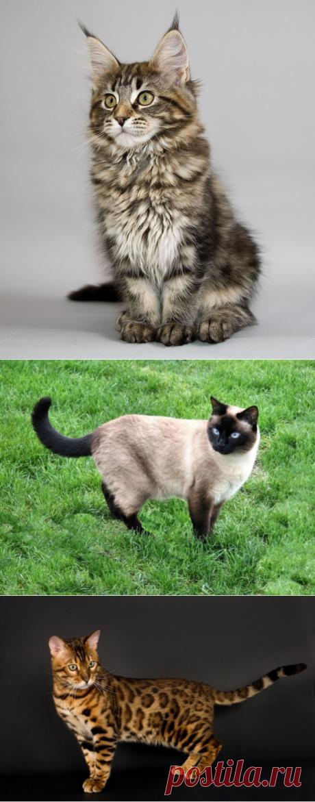20 representantes más hermosos de la familia felino