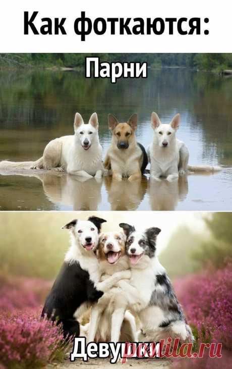 Ох уж эти женские штучки! Подборка юмора))   Дома я хозяюшка   Яндекс Дзен