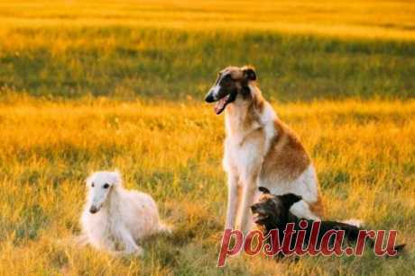 Заблуждения о некоторых породах собак (6 фото) . Тут забавно !!!