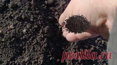 Посадка лука-севка осенью под зиму: озимые сорта, сроки и правила выращивания