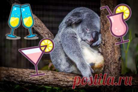 Много пить и не пьянеть: полезные хитрости – Lisa.ru