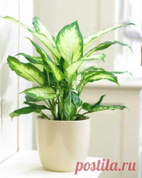 12домашних растений, которые могут выжить даже всамом темном углу