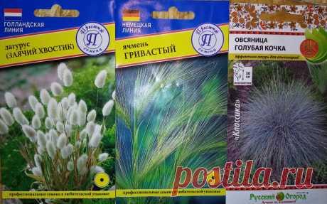 Ожидание-реальность: злаковые из семян | Наша жизнь| сад и огород | Яндекс Дзен