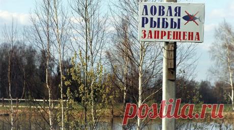Что нового в законе о рыбалке на 2020 год | жерех | Яндекс Дзен