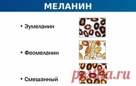 Недостаток меланина: чем возобновить выработку пигмента - Estet-Portal