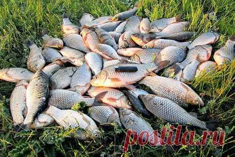 Самодельный активатор клева | Все о ловле рыбы - Рыбалке.нет
