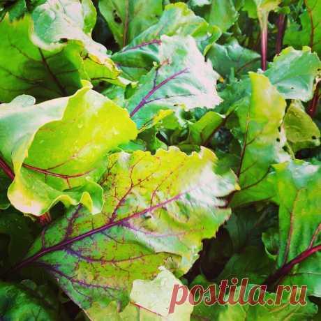Чтобы узнать кислотность почвы, достаточно взглянуть на одно растение в огороде, которое сажают все | посуДАЧИм об огороде | Яндекс Дзен