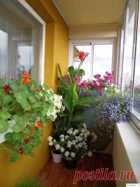Хотите роскошный цветник в квартире? Тогда запоминайте секретики — Садоводка
