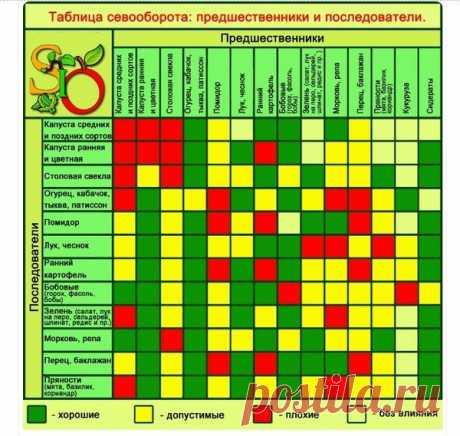 Планируем посадки на будущий год: простые правила севооборота   Наша Дача   Яндекс Дзен