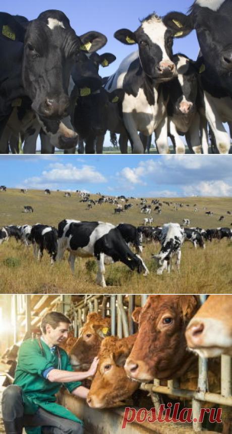 Домашняя ферма - прокорми себя сам - БиоКорова