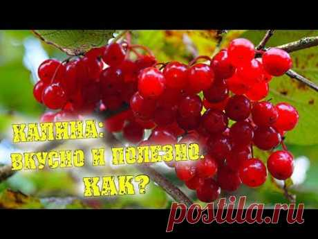 Ягода КАЛИНА - морс из калины ВКУСНО И ПОЛЕЗНО / Семья Фетистовых