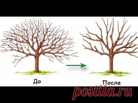 Cutting of fruit-trees for beginners