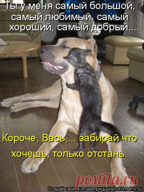 Kotomatritsa: Casual kotomatritsy