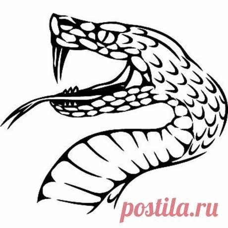 Купить 15.5 см * 13.8 см животного Племенной змея Декор мотоциклов винил автомобиля Стикеры черный/серебристый s6-3155 15.5 см * 13.8 см животного Племенной змея Декор мотоциклов винил автомобиля Стикеры черный/серебристый s6-3155 по самой доступной цене. Товар из Китая, доставка по всей России
