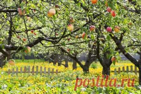 Как вырастить персик в средней полосе Неслучайно на юге говорят о женщине: сладкой, как персик. Это высшая похвала... Читай дальше на сайте. Жми подробнее ➡