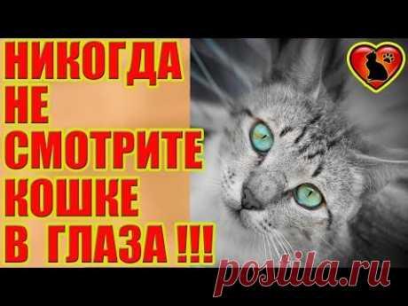 Почему Нельзя Смотреть в Глаза Кошке!?