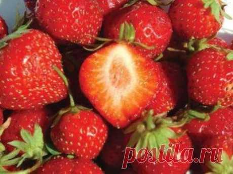 Сорт клубники Мара де Буа, описание, агротехника, особенности