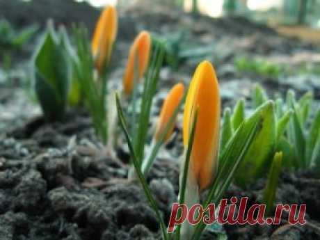 Balandžio mėnėsio darbai sode ir darže | Viskas apie sodą ir namus | Sodininkyste.lt