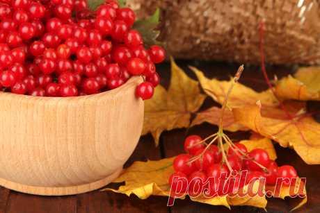 Что приготовить из ягод калины - prosad.ru всё про сад и огород