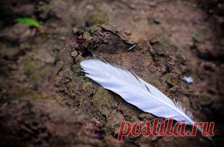 Приметы обещающие важные события в ближайшем будущем: Что случится, если поймать стрекочущее насекомое, найти медные монеты на пути, угощать гостей голубями в свой юбилей, и другие 22 народных поверья: